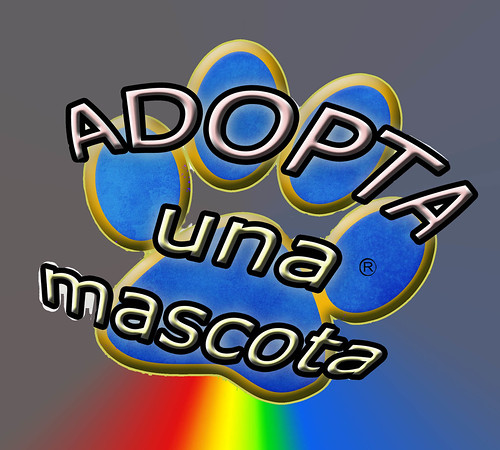 adopta mascota