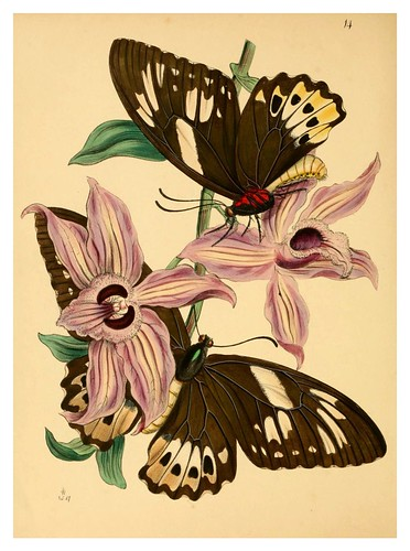004-The cabinet of oriental entomology…1848- John Obadiah Westwood