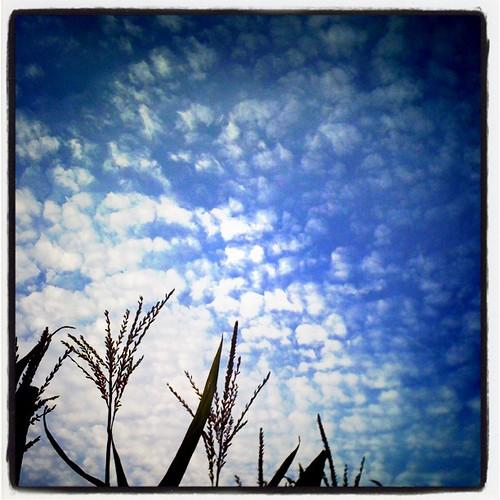 Tassled Sky