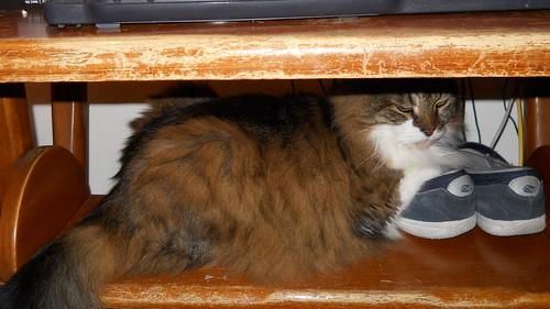 HiHi, hiding by marie watterlond