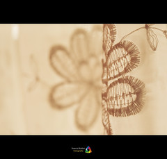 Atrapan la luz. (Franco Rostan | Fotografa) Tags: new light summer sky orange sun color macro reflection verde green art love luz nature argentina colors yellow photography luces photo google nikon flickr day foto photos bokeh top live dia colores explore amarillo reflejo contraste perspectiva 365 week36 geo da naranja nueva fotgrafo franco sep03 brillo day155 day156 fotografa cmara encuadre 2011 enfoque nitidez explored nitido rostan i365 project36582 load03 d3100 nikond3100 francorostan