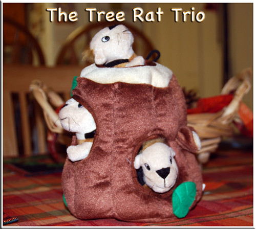 Tree-Rat-Trio