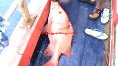 20100710 (fymac@live.com) Tags: mackerel fishing redsnapper shimano pancing angling daiwa tenggiri sarawaktourism sarawakfishing malaysiafishing borneotour malaysiaangling jiggingmaster