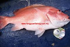 20100831 (fymac@live.com) Tags: mackerel fishing redsnapper shimano pancing angling daiwa tenggiri sarawaktourism sarawakfishing malaysiafishing borneotour malaysiaangling jiggingmaster