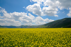 Umbria - Castelluccio - Fiorita (adriano1281) Tags: sky italy panorama mountain montagne landscape reflex nikon italia nuvole cielo fiori umbria norcia piana castelluccio farro fiorita d7000