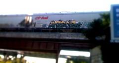 CP Rail (+PR+) Tags: railroad streetart chicago graffiti mayor trains spraypaint d30 railfan freight boxcars railcars cprail rollingstock rxr benching