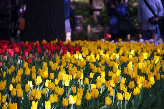 110417_151400_横浜_花と緑のスプリングフェア2011