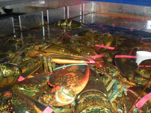 E.A.T Lobster, Scarborough Maine