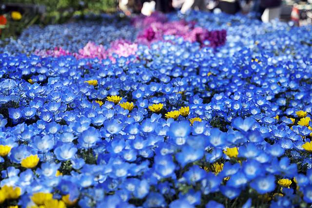 110417_154531_横浜_花と緑のスプリングフェア2011