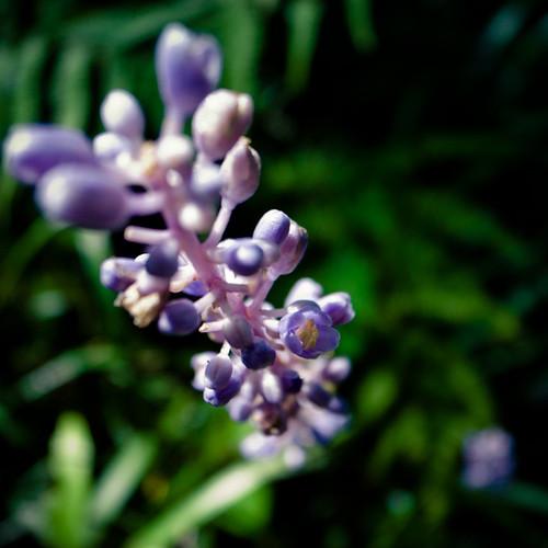 Purple Modular Bubble Blossom