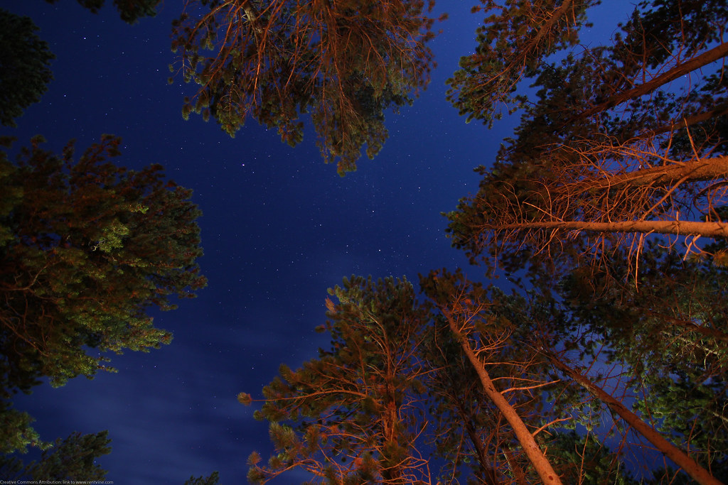 Stars over a campfire light by Dave Dugdale, on Flickr