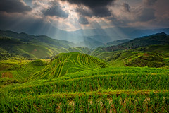 Longji rice terrace (Helminadia Ranford) Tags: china travel nature landscape day rice cloudy terrace guilin rays longji singleexposure