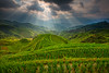 Longji rice terrace (©Helminadia Ranford) Tags: china travel nature landscape day rice cloudy terrace guilin rays longji singleexposure