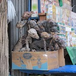 "Llama Fetuses at the Witchcraft Market <a style=""margin-left:10px; font-size:0.8em;"" href=""http://www.flickr.com/photos/14315427@N00/6161447582/"" target=""_blank"">@flickr</a>"