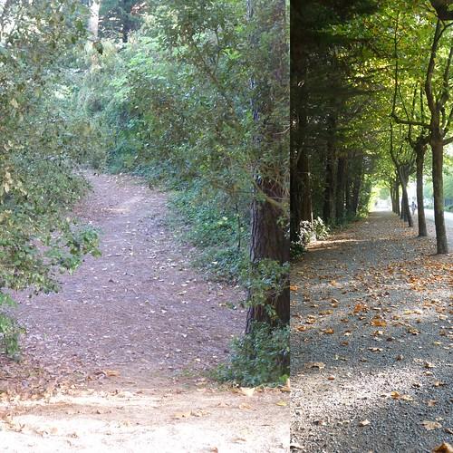 Avenue de la forêt, St-Jean-de-Monts