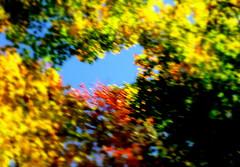 zoomy (dmixo6) Tags: autumn trees colour nature beauty leaves maple muskoka dugg dmixo6