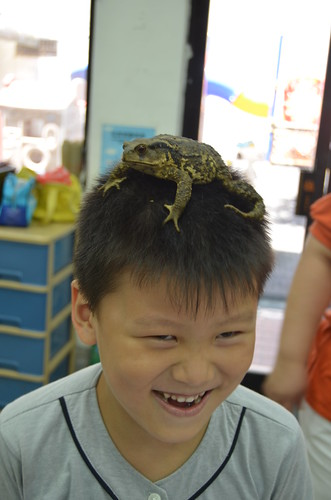 可愛又有趣的蟾蜍其實一點也不可怕。圖:呂軍逸。