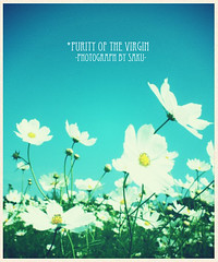 Purity of the Virgin/秋桜 (sakuto-style) Tags: flower crossprocess pastelcolor コスモス