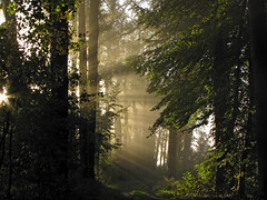 And there was light (Wilma1962*) Tags: trees mist fog nevel bomen ngc lightbeams sunbeams zonnestralen debannink mygearandme mygearandmepremium mygearandmebronze mygearandmesilver mygearandmegold mygearandmeplatinum mygearandmediamond