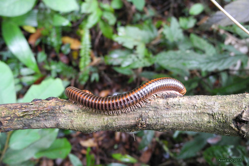 Bokor National Park