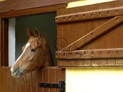 Cocheira (Edson Grandisoli. Natureza e mais...) Tags: animal água cavalo corrida criação jóquei cocheira vertebrado