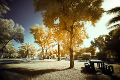 Breezy Afternoon (Infrared Photography) (josecarlo1129) Tags: sunset apple photography travels nikon landscaping tripod 15 tokina infrared pro mm grip 77 hoya ballhead d300 r72 1116 macbook manfortto 293corei78gbram2011wacom