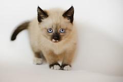 Cat #295/365 [+2]