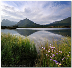 Vermilion Lake Grass Flowers (Panorama Paul) Tags: grass clouds sunrise reflections banffnationalpark vermilionlakes nohdr sigmalenses nikfilters vertorama nikond300 wwwpaulbruinscoza paulbruinsphotography blinkagain bestofblinkwinners