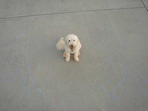 Puppy by Woodlawn School