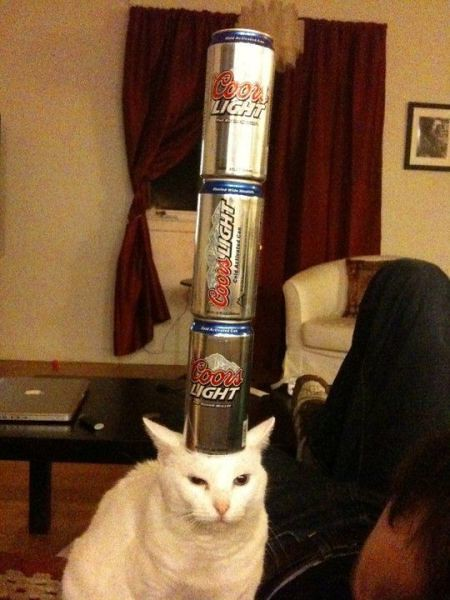 beercan tower cat