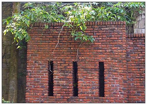20111028磚與葉
