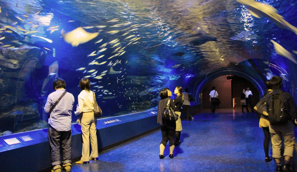 Epson Aquarium
