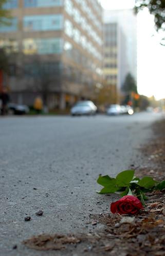 Careless love - #302/365 by PJMixer