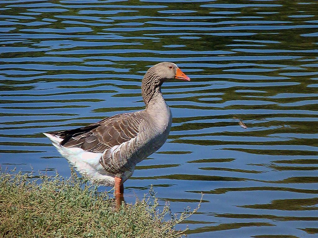 29-10-2011-mr-duck