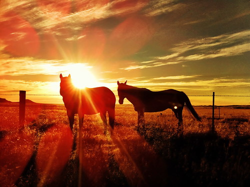 """Horses at Sunrise - Wyoming • <a style=""""font-size:0.8em;"""" href=""""http://www.flickr.com/photos/20810644@N05/6311402259/"""" target=""""_blank"""">View on Flickr</a>"""