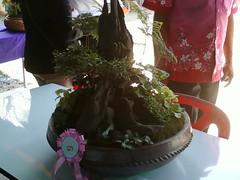 Garden tray003