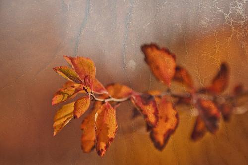 Herbsttexturen by fotografiehalle
