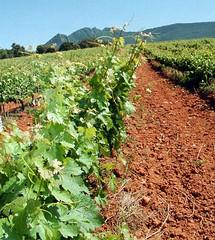 La producción mundial de vino se mantiene estable este 2011