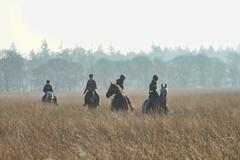 Hoge Veluwe (gill4kleuren - 11 ml views) Tags: sky horses tree nature hoge veluwe heide riders paarden wolfheze sunrishe oostelo