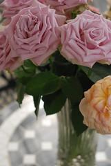 Bouquet (KOROPPY) Tags: autumn flower rose purple chiba bouquet   nikond80  nikkor35mm12 keiseirosegarden