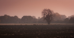 Silence (mari-we) Tags: autumn tree germany deutschland herbst lonely rhine karlsruhe rhein baum badenwrttemberg floodplain auen neureut