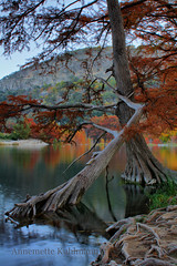 The fallen (annemette kuhlmann) Tags: longexposure trees reflection fall nature water colors canon evening texas fallcolors cypress hdr annemette deadtrees garnerstatepark baldcypress kuhlmann annemettekuhlmann