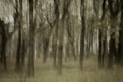 Into the woods (Pieter Musterd) Tags: wood motion blur forest photoshop canon movement raw arty artistic creative motionblur bosque 5d nik bos wald fort foresta cameramovement kreatief artistiek movingcamera colorefexpro  pietermusterd photoshopcs4 canon5dmarkii gisellavirus