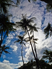 Close of an exciting long day... (missnoma) Tags: sky silhouette clouds palms hawaii oahu dusk honolulu holidaytravel itsawonderfulworld magicunicornverybest closeoffirstday