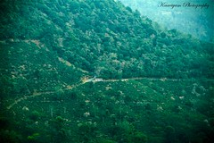 Driving through the evergreen valley ( Kaaviyam Photography) Tags: road india mist bus art swimming photography driving kerala evergreen valley through turns ontheroad westernghats gogreen coolgreen mistyvalley savetrees kaaviyam swimmingthroughtheevergreenvalley acloserviewfromtheponmudi