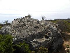 DSCN8395 (Robby's Sukkulentenseite) Tags: chile cactus cacti habitat reise intermedia kaktus pichidangui kakteen eriosyce standort subgibbosa neoporteria rb2015 ka3387s ka4749s