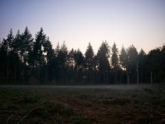 Mist aan de grond (ednl) Tags: autumn sunset oktober sun mist fall fog forest outdoors zonsondergang october afternoon herfst sunny bos zon buiten baarn najaar namiddag 2011 zonnig provincieutrecht groundfog utrechtprovince radiationfog grondmist stralingsmist
