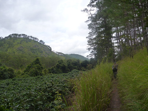 Hiking alongside coffee plantations