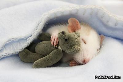 sleepy-mouse