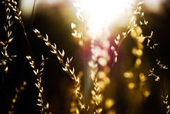 (Ariel G!) Tags: sunset sun sunlight plant evening alice central australia springs northern territory northernterritory alicesprings centralaustralia alicespringsregion